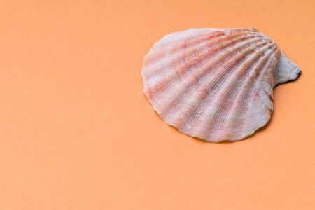 sea shell on a yellow macro background