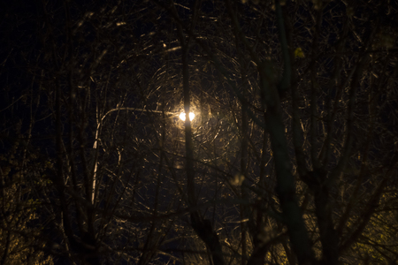 Street light imprisoned