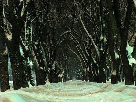 apparent: winter night