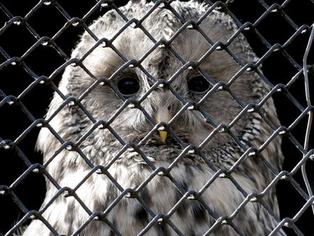 grating: sad owl under grating                               Stock Photo