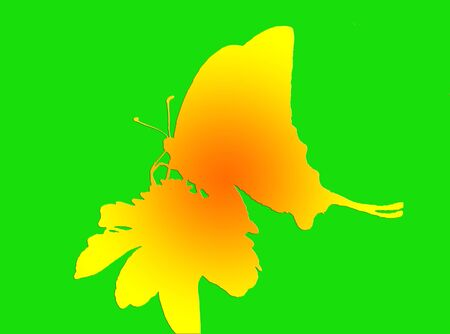buttefly: 2d shape: buttefly sitting on flower over green background Stock Photo