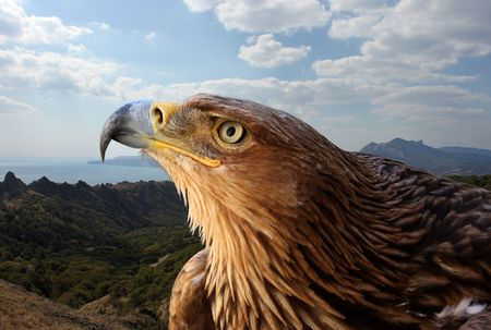 birds eye: golden eagle over mountanious landscape