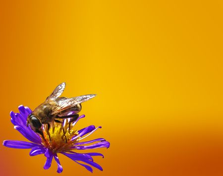 gadfly:  background with gadfly on flower