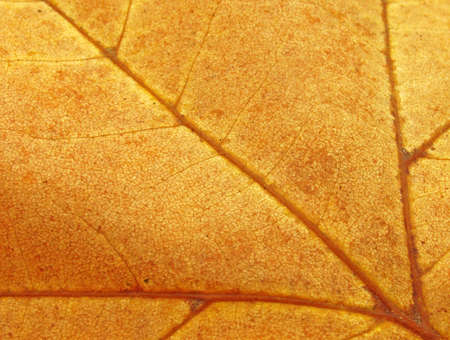 abstract background: close up of brown leaf texture                                photo