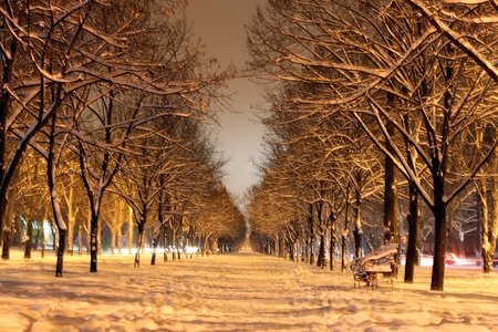 winter avenue at night Stock Photo - 8456116