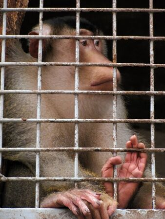 monkey sitting in a zoo cage                                   Stock Photo - 9603918