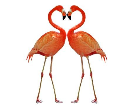 dvě růžové plameňáci dělat srdce s krkem