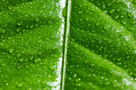close up of wet green leaf photo