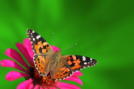 summer background with butterfly (Painted Lady) Stock Photo