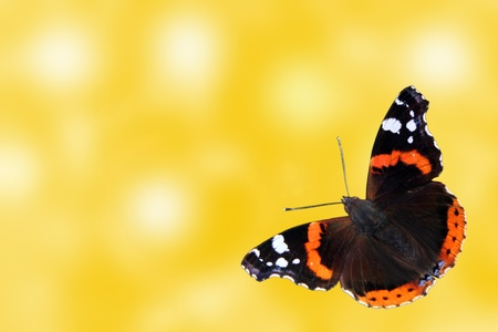 admiral: abstract summer background with butterfly (Red Admiral)