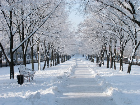 snowy avenue at winter day photo
