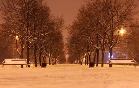 avenue at winter night Stock Photo - 12552357
