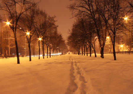 avenue at winter night Stock Photo - 12549253