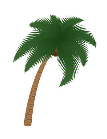 coconut palm tree isolated on white illustration Stock Vector - 12482585