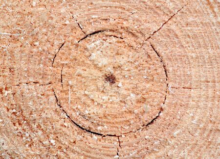 close up of pine sawn end texture Stock Photo - 15825491