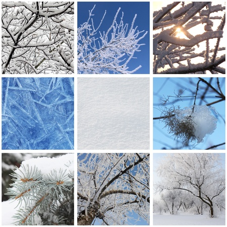 collage with photos of nature at winter Stock Photo - 18691582
