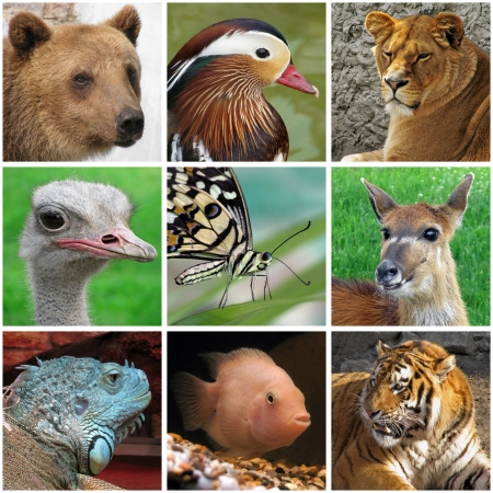 collage with animals from zoo photo