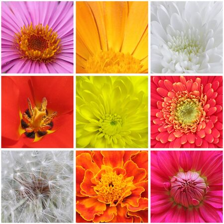 collage with macro photos of flowers photo