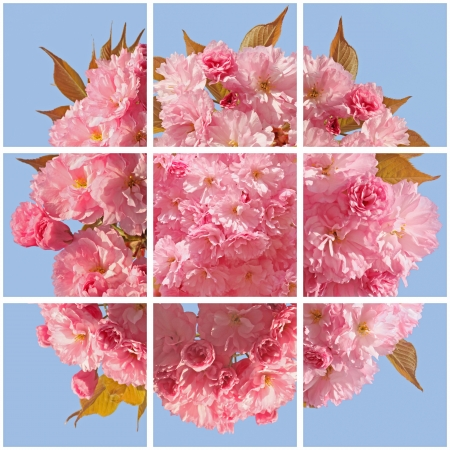square collage with pink cherry blossom photo