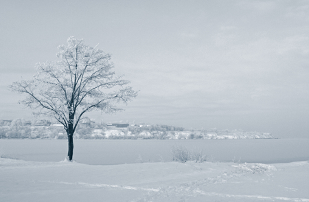 riverside tree: winter landscape with tree at riverside Stock Photo