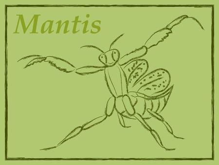 mantis: vector illustration of mantis