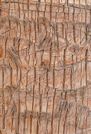 bark palm tree: close up of palm tree bark