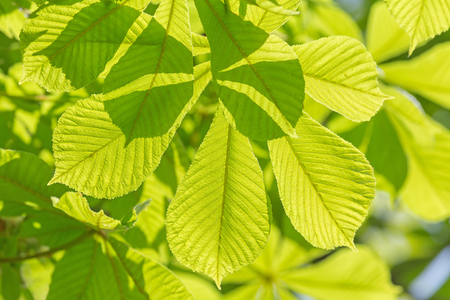 close up of green leaves at spring Banco de Imagens