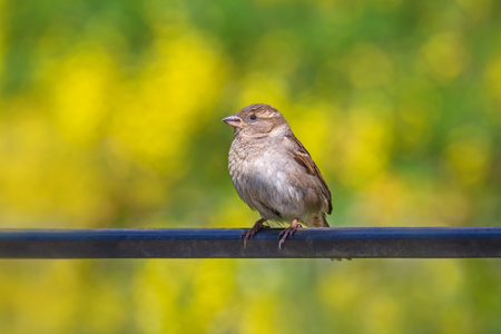 close up of sparrow sitting on metal rod against foliage background Stock fotó