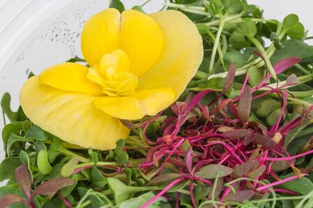 close up of microgreens with yellow viola flower Imagens