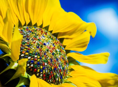 Colorful sunflower photo