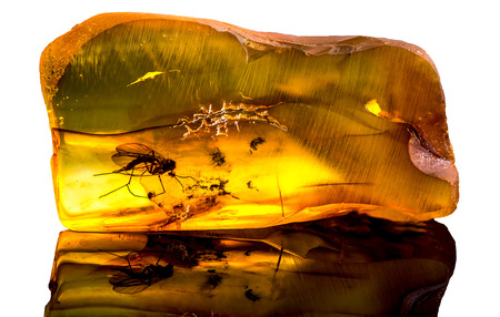 Âmbar báltico surpreendente com congelado nesta parte um mosquito, isolado no fundo branco. Foto de archivo