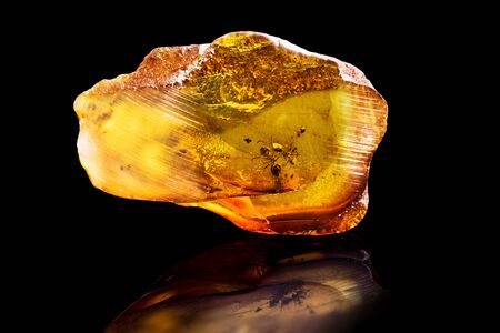 Amazing piece of Baltic Amber with frozen in it ants. Photo isolated on a black background with reflection