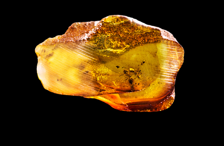 Amazing piece of Baltic Amber with frozen in it ants. Photo isolated on a black background. Banco de Imagens