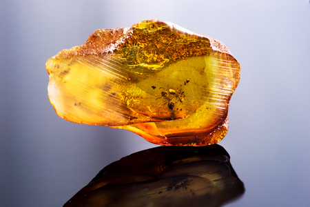 Amazing piece of Baltic Amber with frozen in it ants. Photo with reflection
