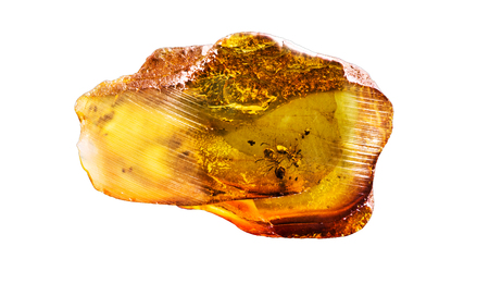 Amazing piece of Baltic Amber with frozen in it ants. Photo isolated on a white background.