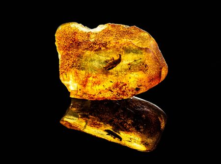 Amazing baltic amber with frozen in this piece a unknown prehistoric insect, isolated on black background.
