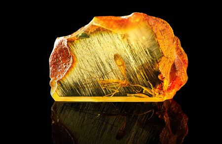 Amazing piece of Baltic amber containing part of an ancient fossilized dragonfly. Photographed at close range, isolated on black background.