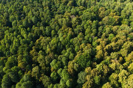 Blick von der Höhe auf den grünen Laubwald. Luftaufnahme. Auf einer Drohne geschossen.