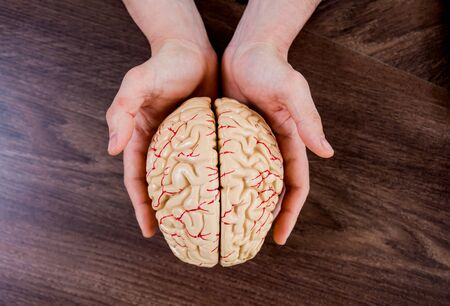 Doctor holding plastic model of human brain. Background