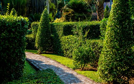 Aménagement paysager de luxe du jardin tropical. Belle vue sur jardin tropical paysager.