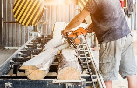 Woodcutter cutting tree with chainsaw on sawmill. Modern sawmill.