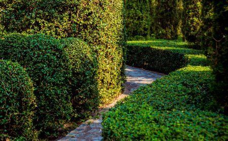 Luxury landscape design of the tropical garden. Beautiful view of landscaped tropical garden.