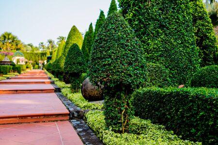 Luxury landscape design of the tropical garden.