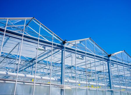Modern glass greenhouses against the blue sky. Banque d'images