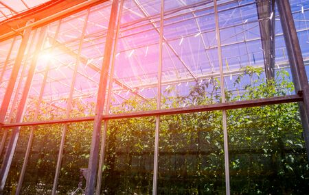 The frame of a modern greenhouse against the sky. Beautiful background