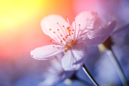 Spring flowers with blurred background. Mackro view. Stock Photo