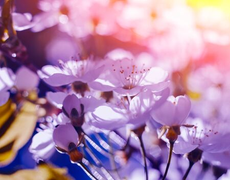 Spring flowers with blurred background. Mackro view. Standard-Bild