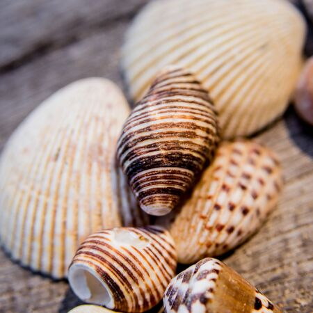 Heart of seashells. Background of a fishing net with hats.