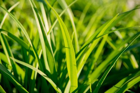 The grass in the sunlight. Light summer background. Stock Photo