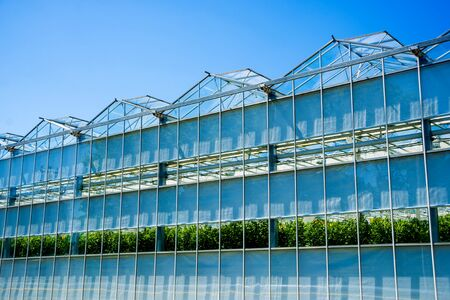 Modern glass greenhouses against the blue sky.